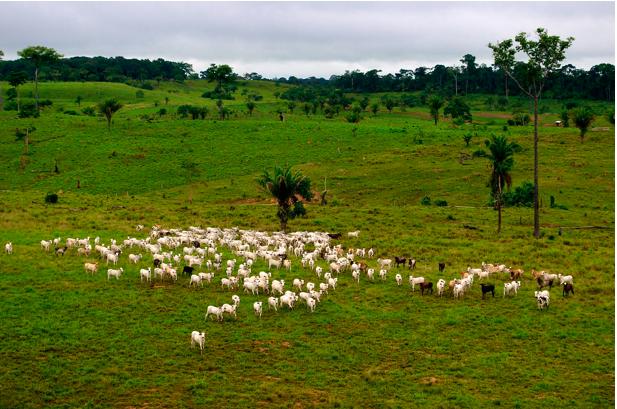 Essen wir unsere Zukunft auf? Landwirtschaft, Klima, Biologische Vielfalt und globale Gerechtigkeit