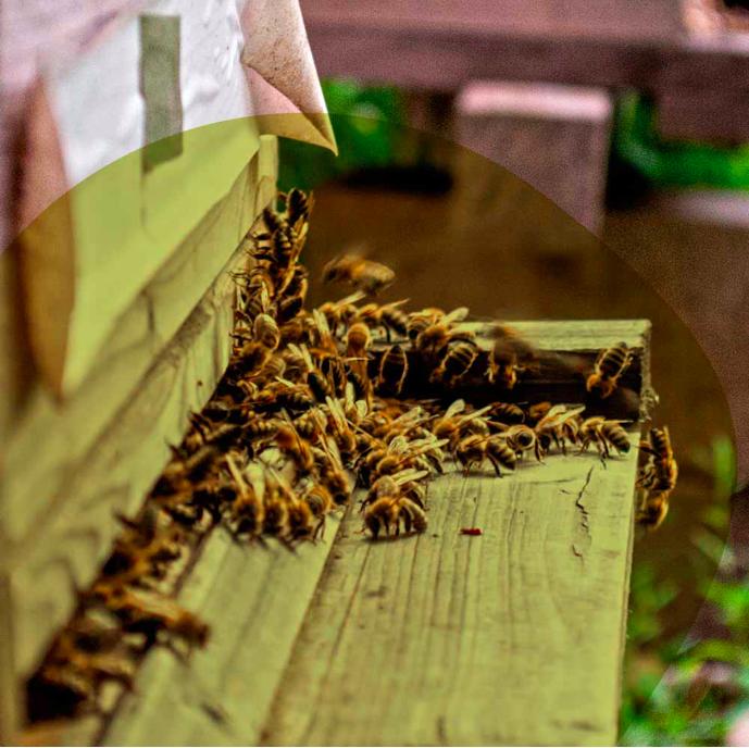 Geschichten aus dem Bienengarten - Ein Online-Workshop zur Bienenhaltung in der Stadt