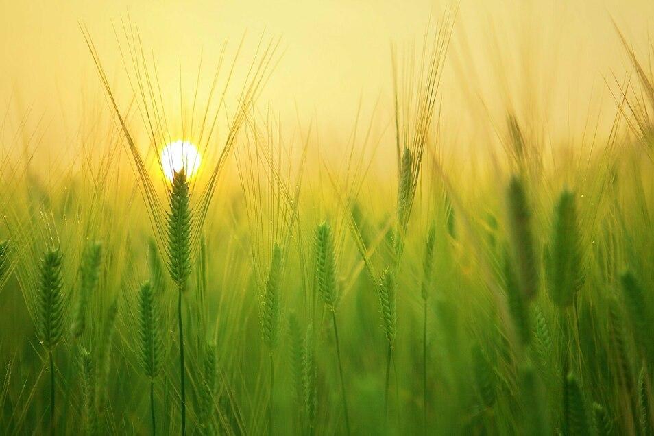 Zur Zukunft der Ernährung: Ernährungsethik und nachhaltige Landwirtschaft. Deutschland reloaded - Zukunftsfest in die Welt von morgen