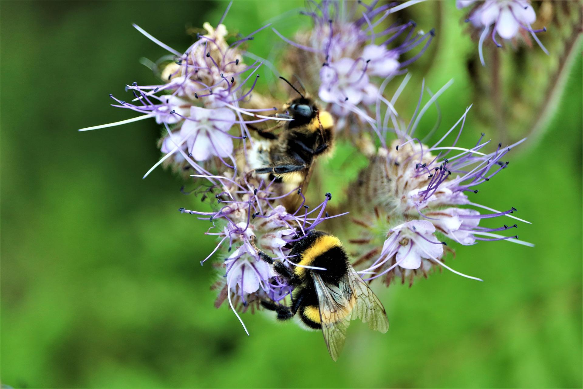 """EU-LIFE Projekt """"insektenfördernde Regionen"""""""