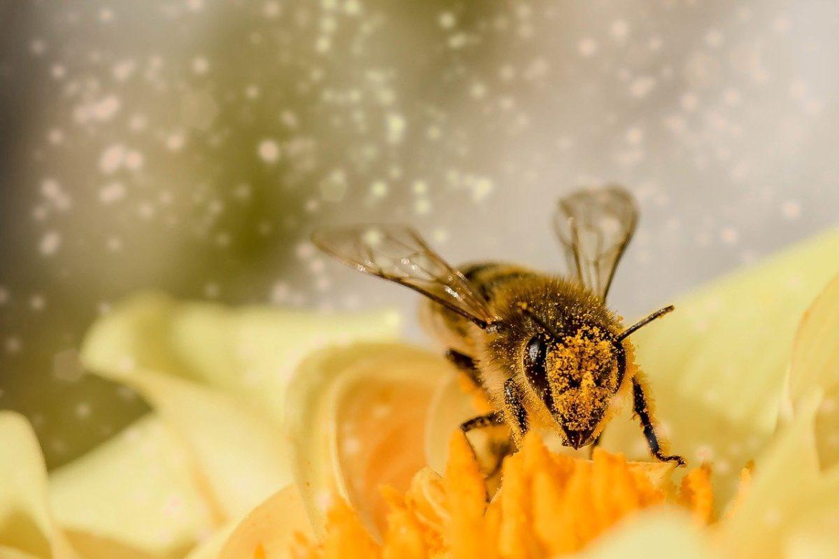 Den Bienen auf der Spur - Bienenlehrpfad Radtour