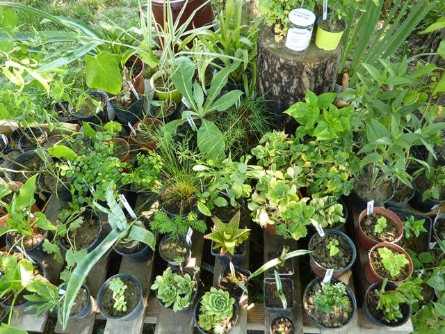Pflanzentauschtag - Pflanzen tauschen und teilen