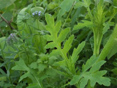 Basiswissen Pflanzenbestimmung
