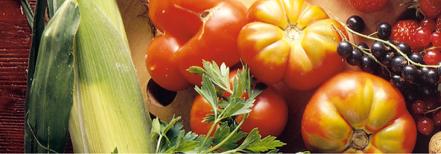 Kunterbunte Pflanzenküche- so gelingt ein pflanzenbasiertes Speisen-Angebot