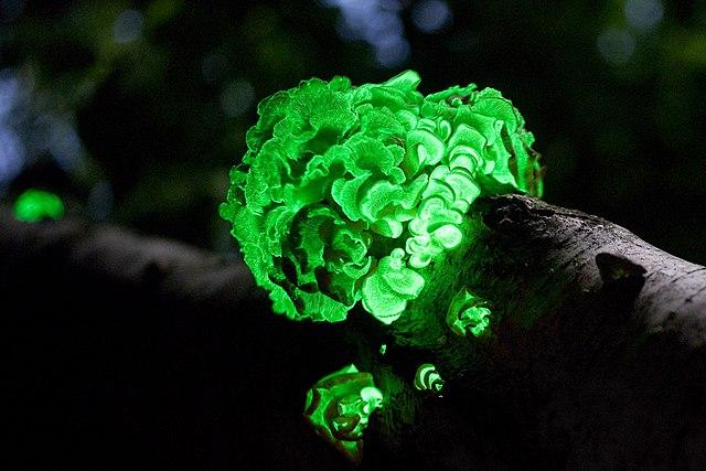 Zukunftsfeld Bioökonomie - Pilze für Nahrung, Kleidung, Wärme und Licht entdecken