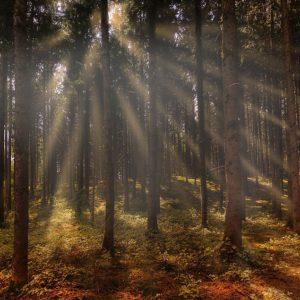 Einen Schritt weiter gehen – Exkursion Ökologischer Fußabdruck & Naturverbindung